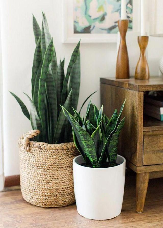 φυτά εσωτερικού χώρου σε γλάστρες