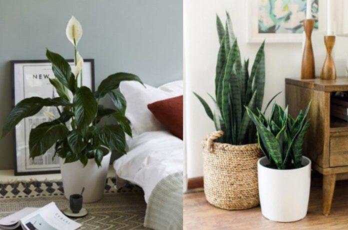 φυτά εσωτερικού χώρου για το υπνοδωμάτιο