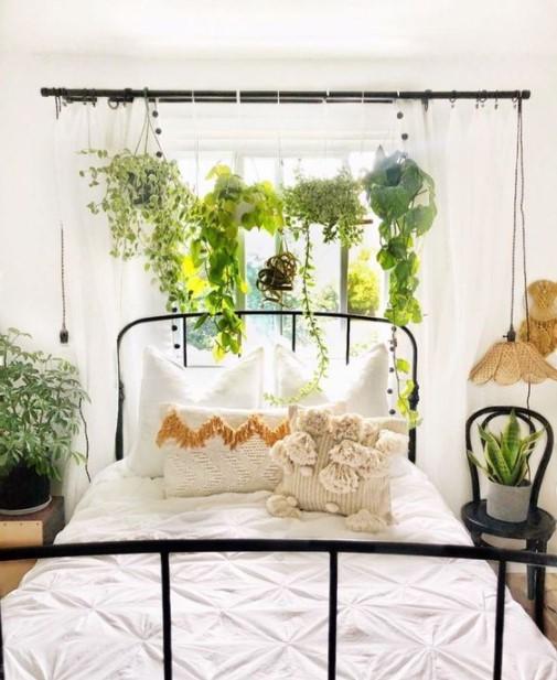 φυτά κρεμασμένα κουρτινόξυλο