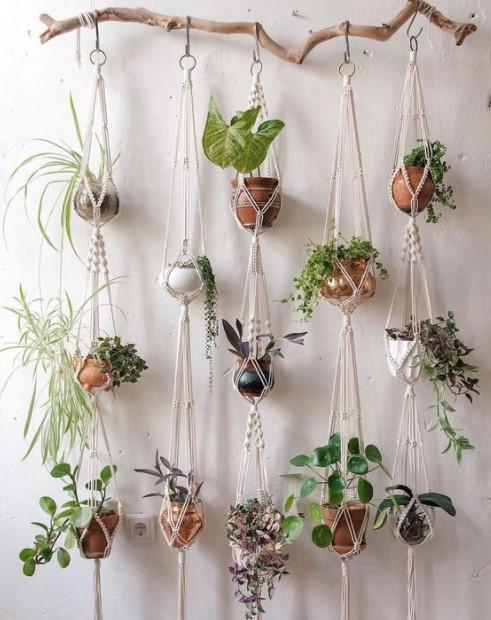 φυτά σχοινιά ξύλο κρεμάσεις φυτά