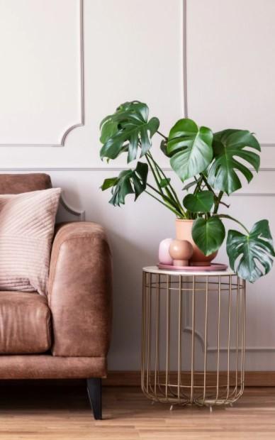 γλαστράκι μονστέρα τραπέζι φυτά 2021