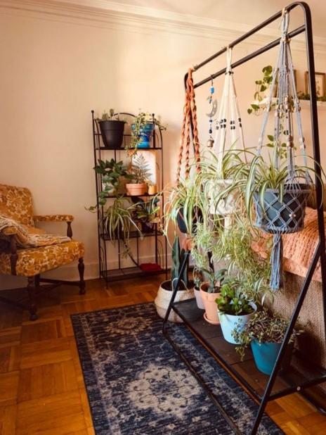 καλόγερος ρούχων κρεμάσεις φυτά