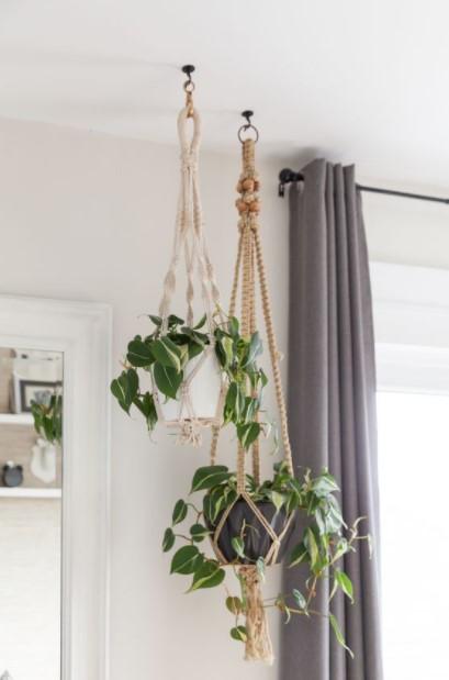 κρεμασμένα φυτά ταβάνι κρεμάσεις φυτά