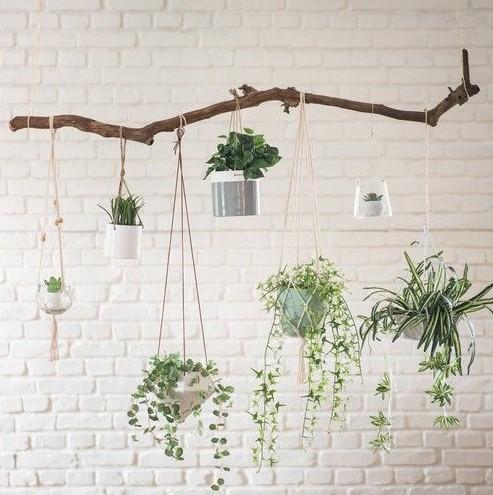 ξύλο κρεμασμένα φυτά