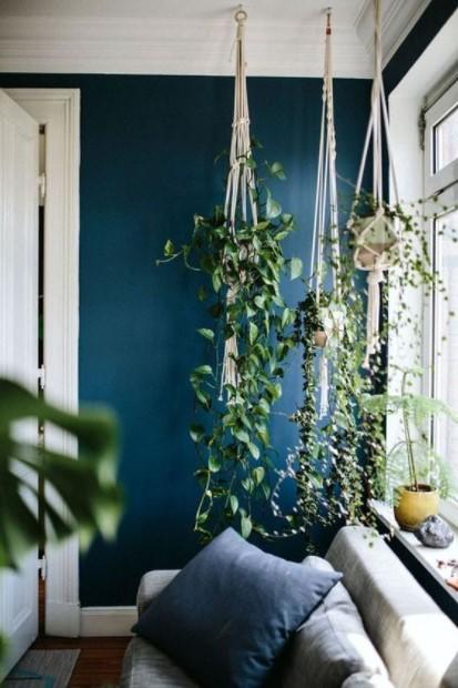 μακριά φυτά ταβάνι