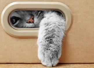 ευκολες diy κατασκευες για γατες