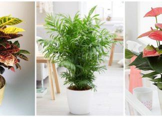 οικονομικά φυτά εσωτερικού χώρου