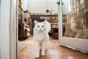 επιθετικη γατα ασπρη