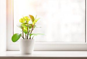 ανοιξη με φυτα στο σπιτι