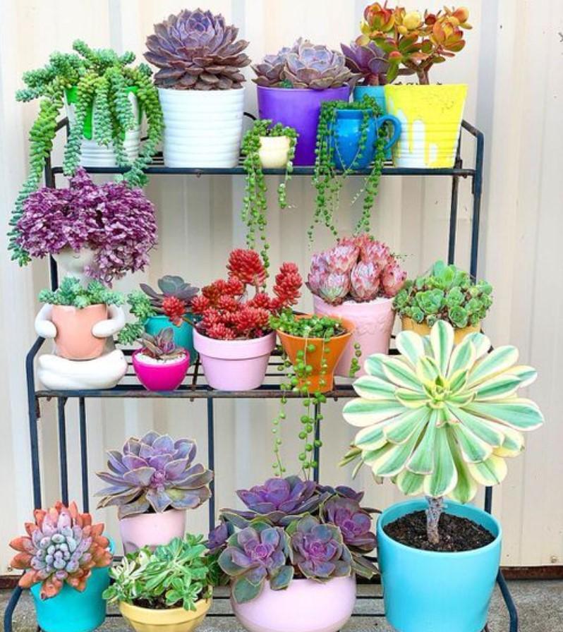 φυτά σε χρωματιστές γλάστρες