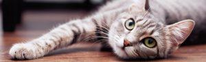 γατα ξαπλωνει