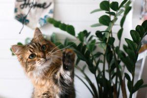 γατα παιζει με φυτο