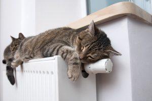 γατες ξαπλωμενες σε καλοριφερ