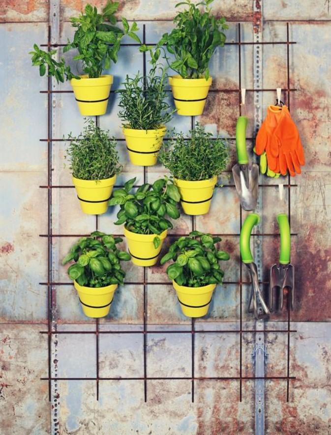 γλάστρες σε τοίχο αυλής
