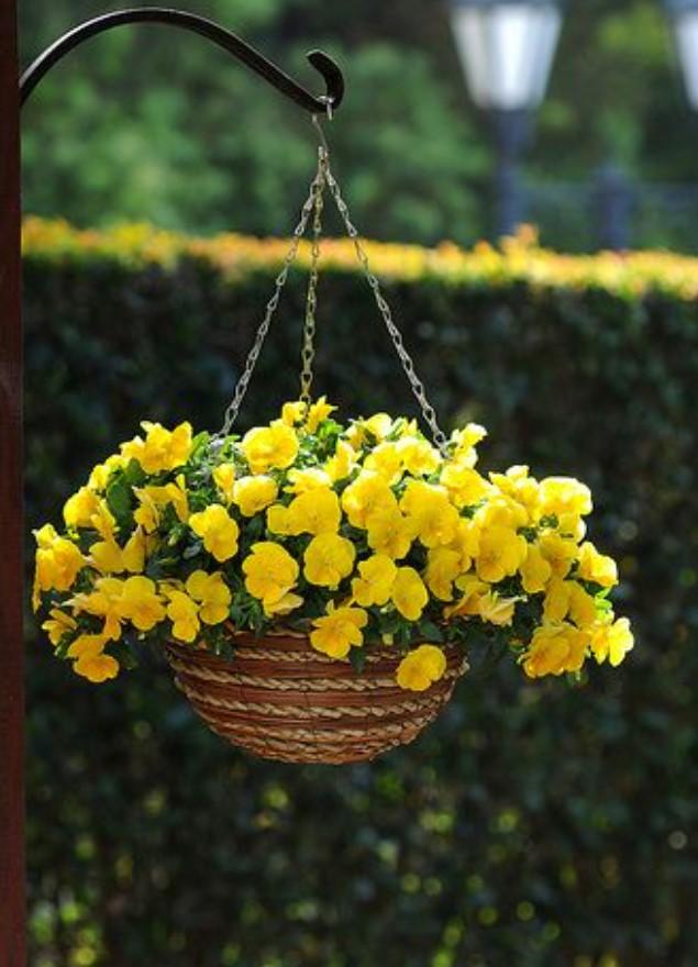 κίτρινο λουλούδι σε κήπο σπιτιού