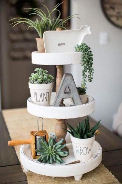 παχύφυτα σε δίσκο φυτά κουζίνα