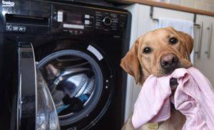 πλυντηριο ρουχων σκυλος