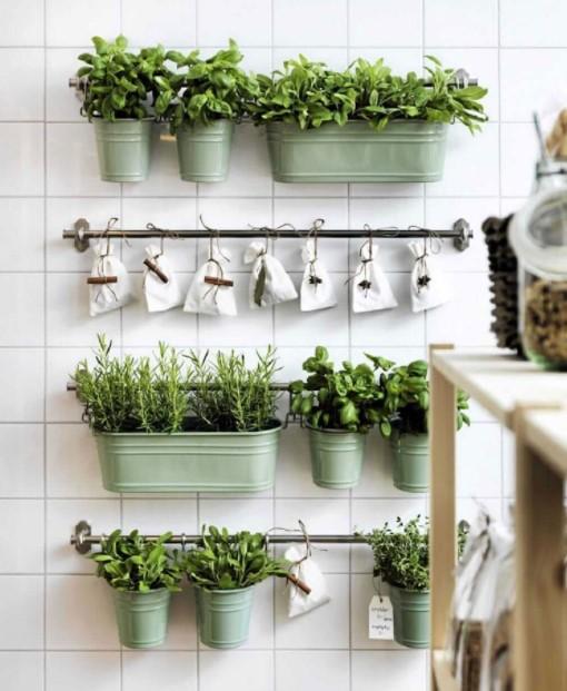 τοίχος γλαστράκια βότανα
