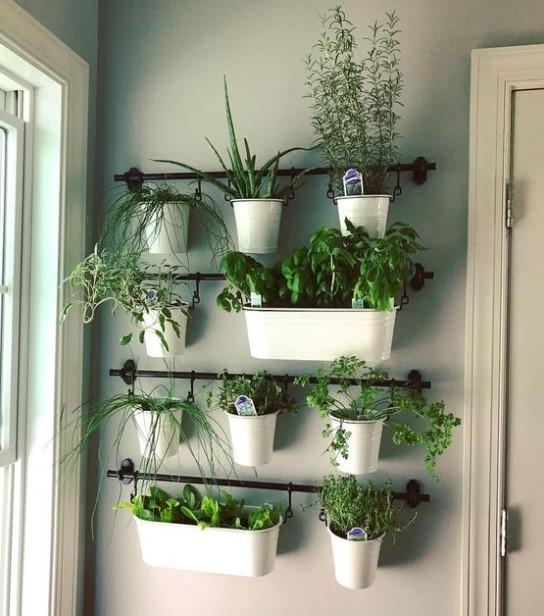 τοίχο βότανα μυρωδικά φυτά κουζίνα