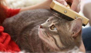 βουρτσισμα γατας