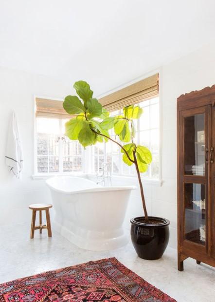 φίκος λυράτα μεγάλο μπάνιο