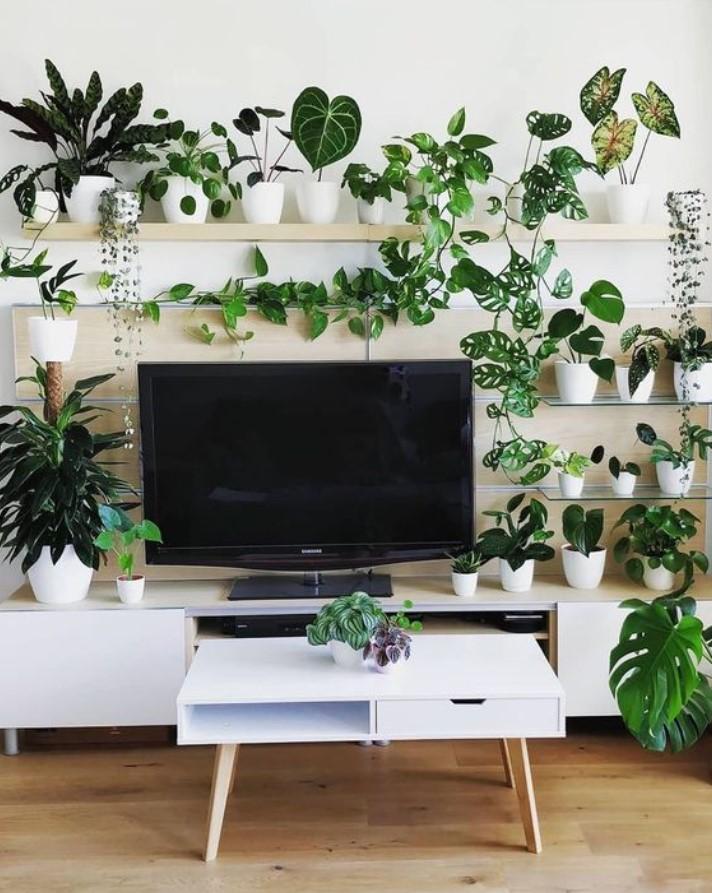 φυτά γύρω από τη τηλεόραση