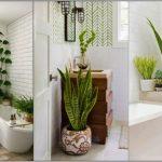 φυτά μπάνιο