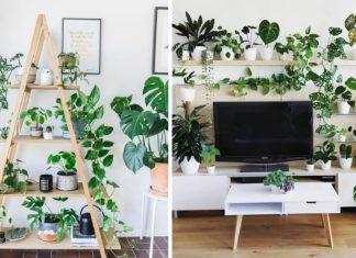 ιδέες διακόσμησης σαλονιού με φυτά