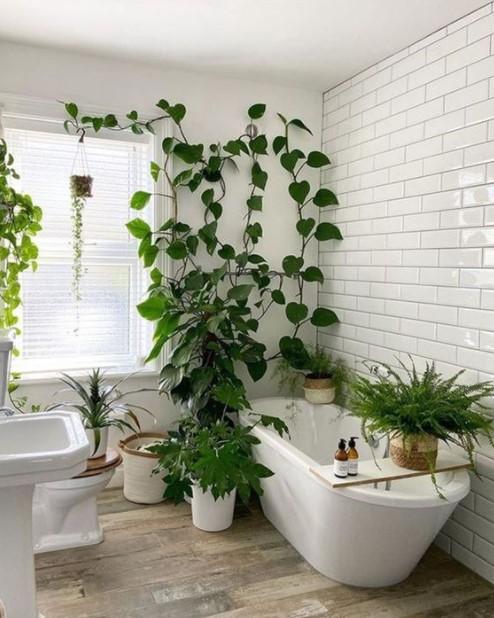 μπάνιο με πολλά φυτά