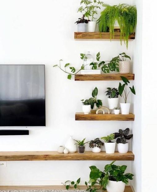 ράφια πολλά φυτά