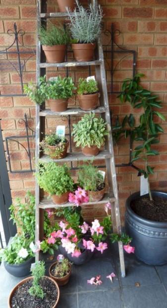 σκάλα εξωτερικό χώρο φυτά