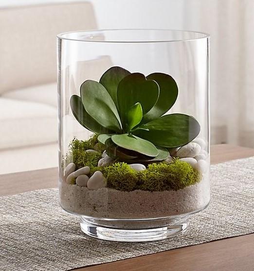 ποτήρι άμμος φυτό