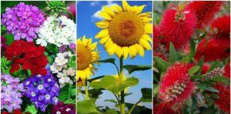 φυτά που αντέχουν στη ζέστη