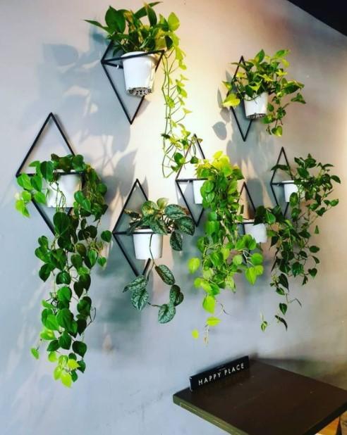 φυτά κρεμασμένα τοίχο καλοκαιρινό τοίχο