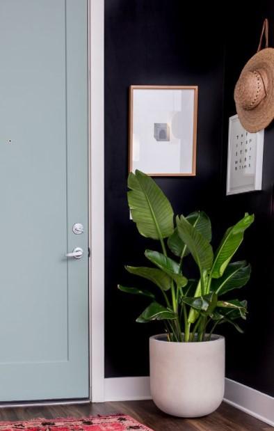 γλάστρα φυτό είσοδος