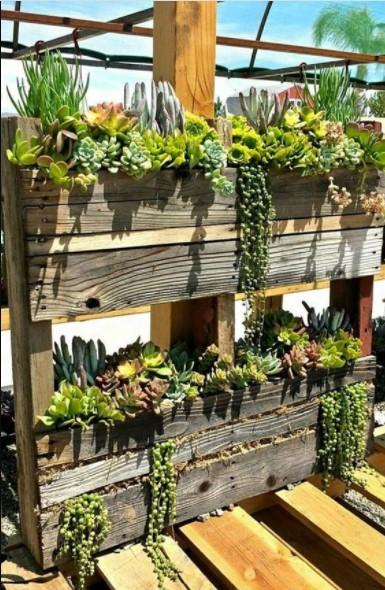 παλέτα παχύφυτα διακόσμησης φυτά