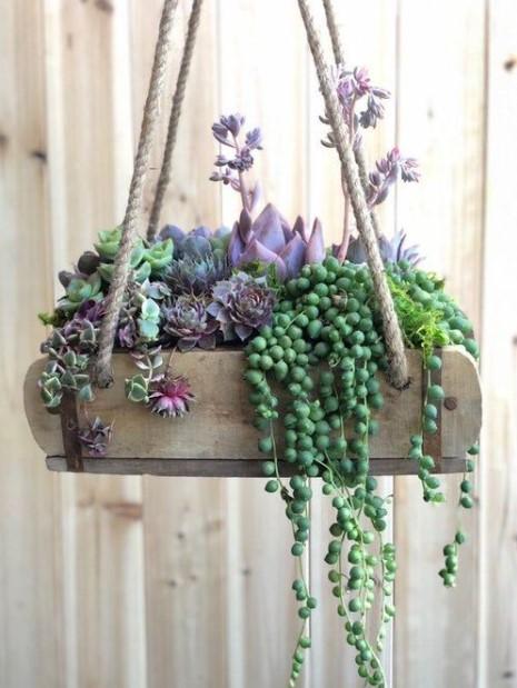 φυτά κρεμασμένο κασπό