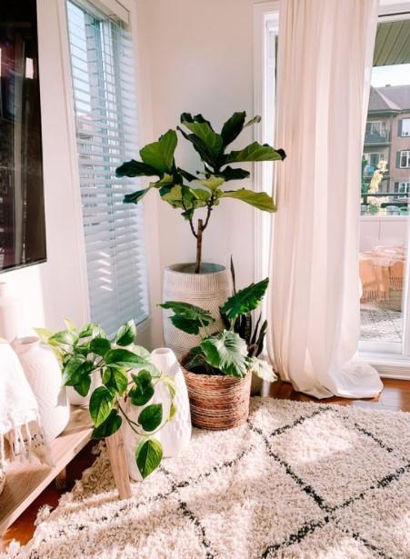 σαλόνι φυτά εσωτερικού χώρου