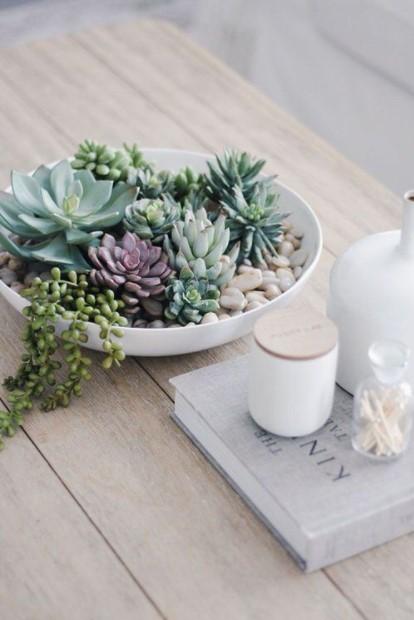 τραπεζάκι μπολ παχύφυτα διακόσμησης φυτά