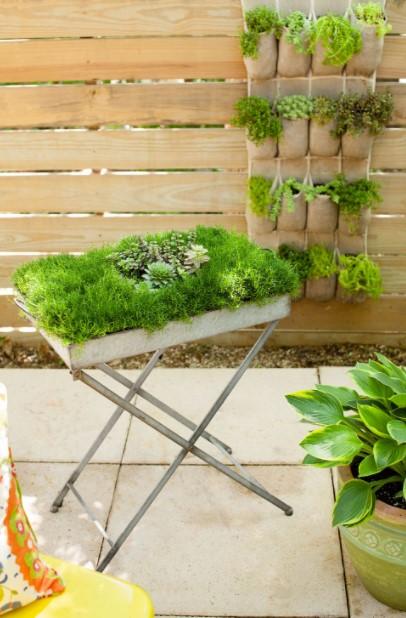 δίσκος φυτά διακοσμητικά κήπο