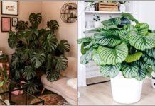 φυτά κλέψουν εντυπώσεις