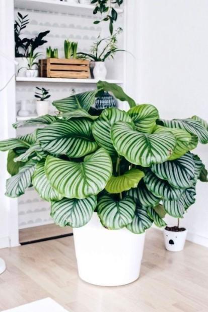 καλαθέα φυτά κλέψουν εντυπώσεις