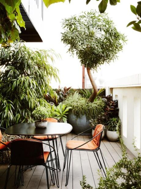 μπαλκόνι φυτά δέντρο