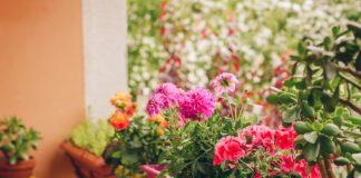 λουλούδια χρωματιστό μπαλκόνι