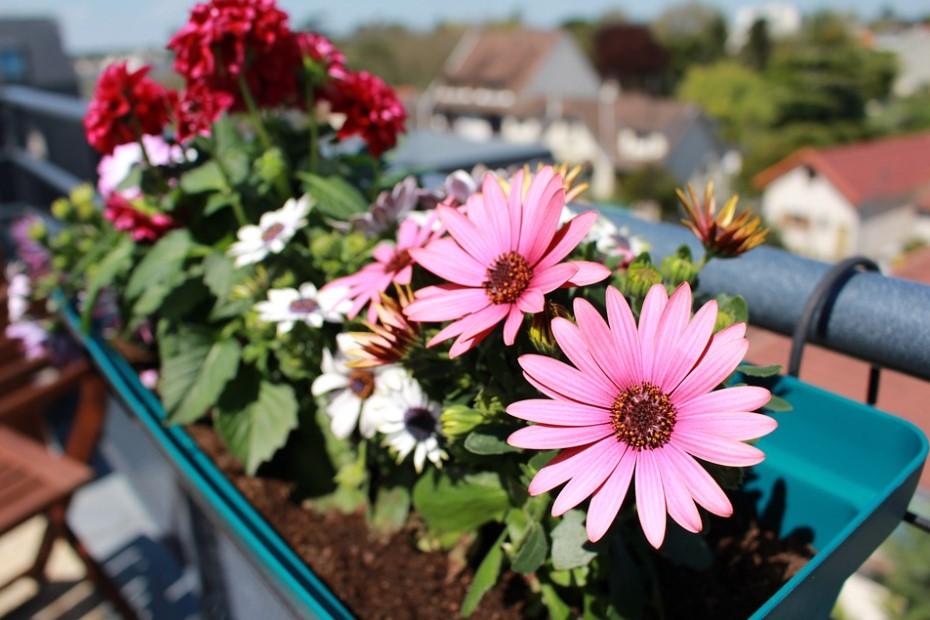 πολύχρωμες μαργαρίτες λουλούδια χρωματιστό μπαλκόνι
