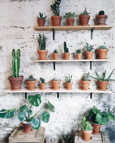 ράφια τοίχος φυτά