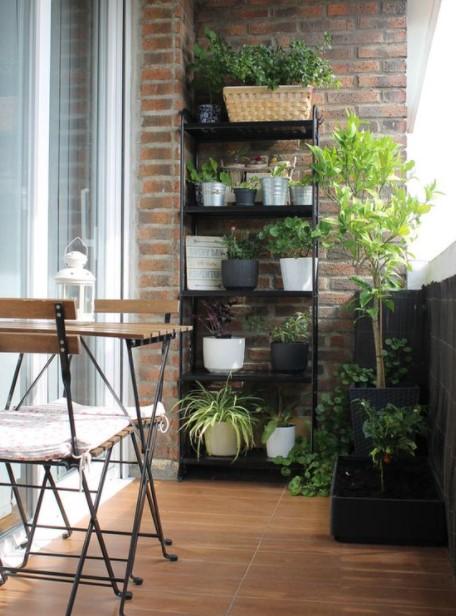 βεράντα ραφιέρα φυτά
