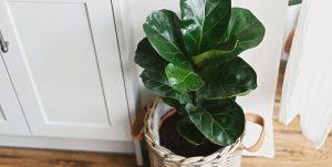 φυτό εσωτερικού χώρο
