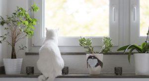 γάτα γλαστρες