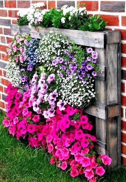 παλέτα λουλούδια κήπος